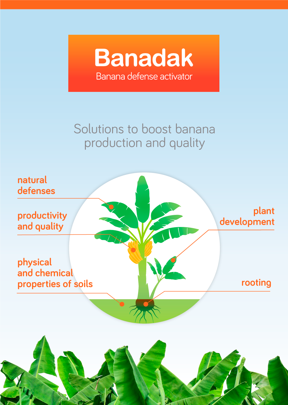 Banadak: Solutions to boost banana production and quality