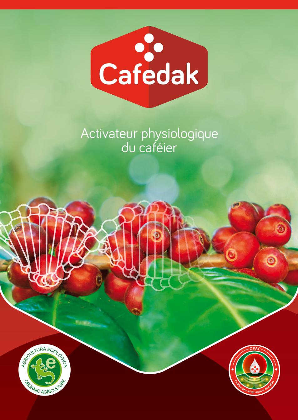 Cafedak: Activateur physiologique du caféier